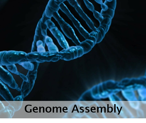 Genome Assembly